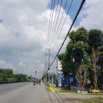 Đất mặt tiền Quốc lộ 22, ấp Hậu, xã Tân Thông Hội, huyện Củ Chi