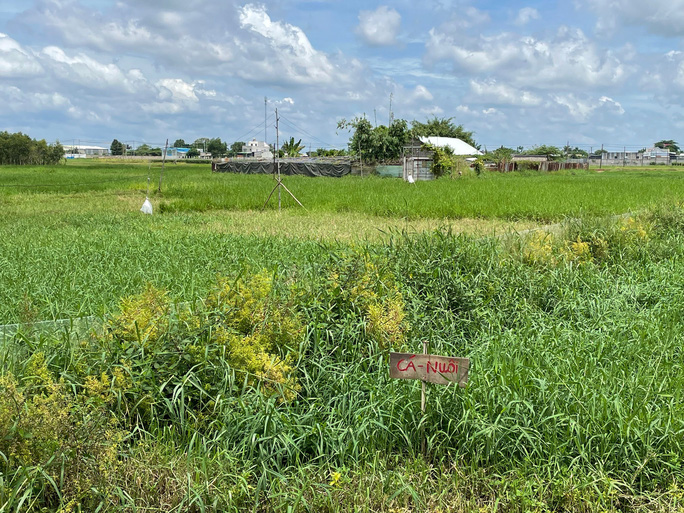 Một khu đất rộng lớn nằm trong quy hoạch KCN Xuân Thới Thượng bị bỏ hoang. Ảnh: THU HỒNG